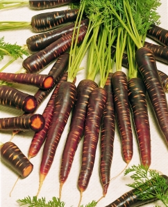 'Purple Haze' carrot. Credit: All-America Selections