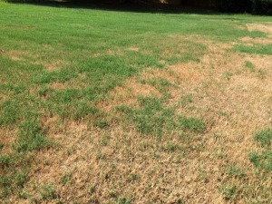 scalped bermuda lawn 1
